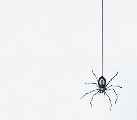 Garden Poster Surrealism Illustration-sketch of a black spider drawn in black china dangling isolated on a white sheet background