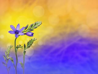 Purple freesia flowers blurred background