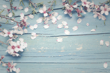 Blue wooden background with almond flowers