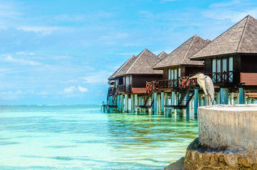 Heron and exotic wooden huts on the water, Maldives