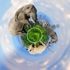 Wall Mural - 360 degree view of Elephant, zebra, rhino with the city of on the background