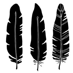 Hand drawn bird feathers, black silhouettes