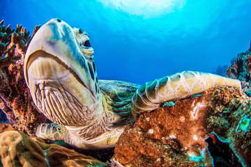 Close-up photo of a turtle