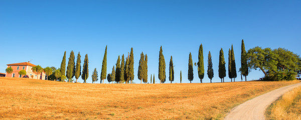 In de dag Olijf Beautiful typical panorama landscape of Val d'Orcia in Tuscany at sunset, Italy