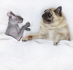 Happy pet family