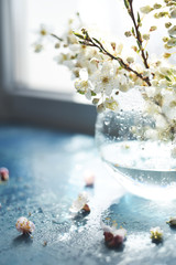 Delicate branches of flowering cherry in a glass vase on a light window. Very soft selective focus.