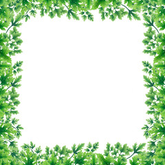 Green parsley leaves at the borders in the square of the illustration. Inside an empty white background.