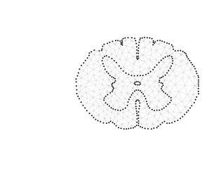 spinal cord polygon black-white