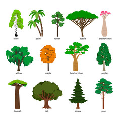 Vector trees. Forest tree set with titles, birch and oak, pine and baobab, acacia and spruce vector