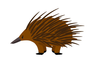 Echidna. Cute vector echidna character on white