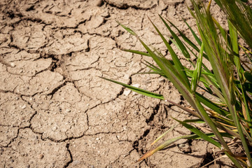 Cracks the drought in Spain's dry fields. Mud barren.