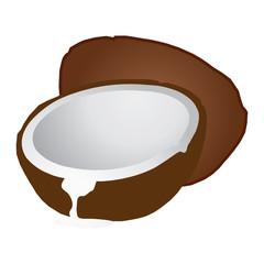 Coconut Illustration.