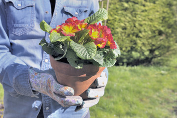 close on flower pot holding by a gardener in a garden