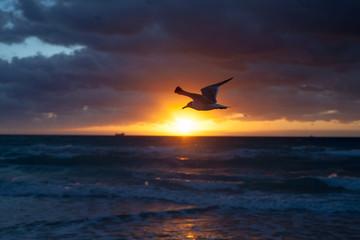 Seagull on Miami beach sunrise - Miami Beach, March 2017