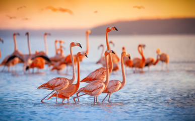 Fototapeten Flamingo pink flamingos in sun