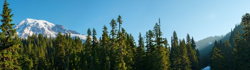 Forest and Mount Rainier at Mount Rainier National Park, Washington State, USA