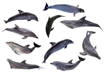 ten grey doplhins isolated on white