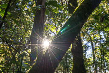 sun star light behind branch tree forest