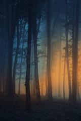 surreal dark woods, halloween background
