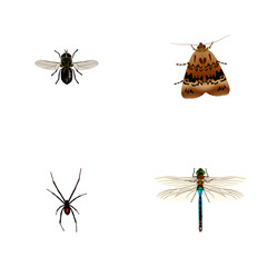Set of bug realistic symbols with dragonfly, moth, spider and other icons for your web mobile app logo design.