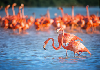 Tuinposter Flamingo Two flamingos in water