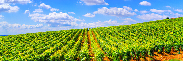 Foto auf Leinwand Weinberg Vineyards of Burgundy - France