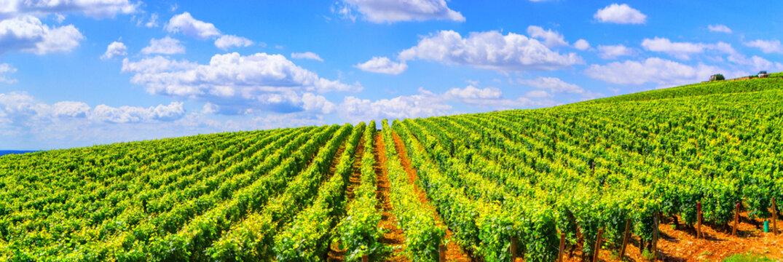 Vineyards of Burgundy - France