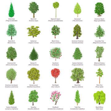 Tree types icons set, isometric style