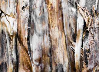 Banana Tree Dry Barks Background Surface