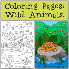 Coloring Pages: Wild Animals. Viper lies on the stone.