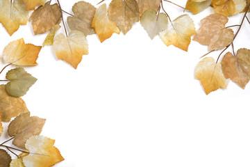 Autumn leaf artistic border isolated on white