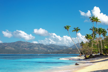 empty beautiful Caribbean beach with white sand and high palm trees