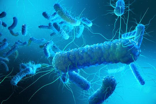 Enterobacterias Gram negativas Proteobacteria, bacteria such as salmonella, escherichia coli, yersinia pestis, klebsiella. 3D rendering.