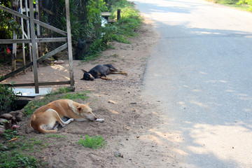 Dogs from Sri lanka