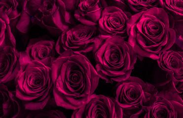 purple, pink roses