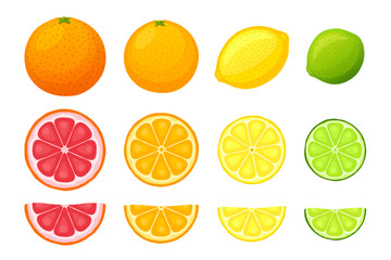Vector illustration set of citrus fruits