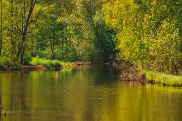 the small river in summertime.narrow river and grass growing on the shore, close-up in summer in sunny weather.A river with dirty water flowing through a mixed forest. landscape in the spring