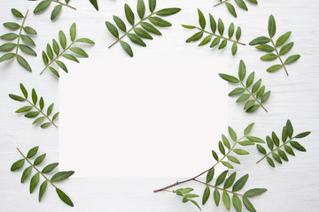 Green leaves of pistachios on a white wooden background and a place for the inscription