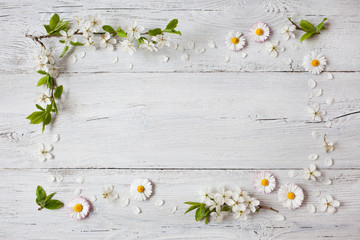 Background with daisies and blooming cherry, plum