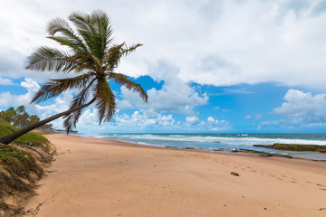 Lone coconut leaning on deserted tropical beach