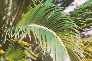 Close up of palm leaves background with sun beams natural floral background
