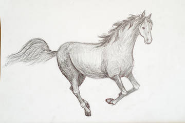 Pencil drawing of an Arabian horse, head only