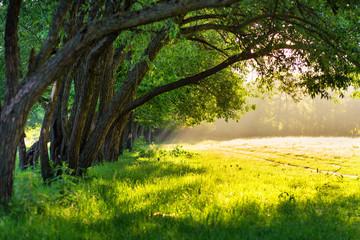Morning light. Sunlight in green park.