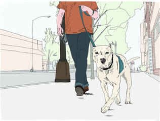 A cute, peppy Pit mix dog takes a walk down a city street. The dog has dark eye and one light.