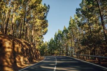 road in the forest La Esperanza