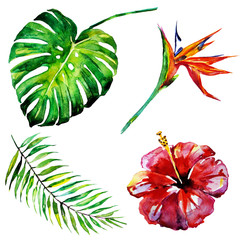 tropical palm tree, leaves,flowers,summer time
