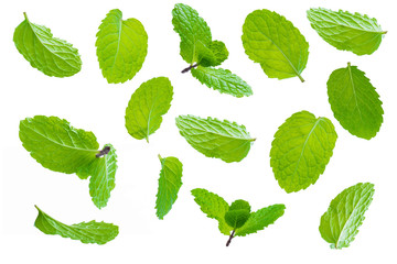Fly fresh raw mint leaves isolated on white