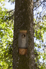 birdhouse in park