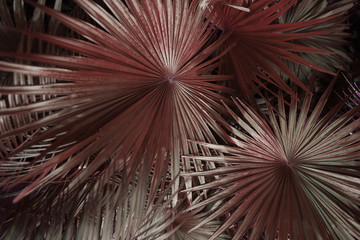 Fotomurales - close up dark brown Tropical big palm leaves in exotic country. concept of foreign background, summer plants or nature and travel