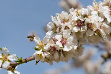 abeja transportando el polen